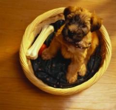 Alimentazione-per-i-cuccioli-di-cane_N2.jpg